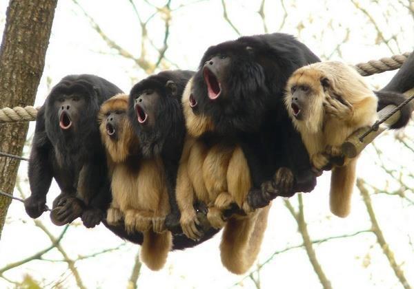 """Cantare in un coro: condividere la stessa """"corda"""". W la Musica corale!!"""